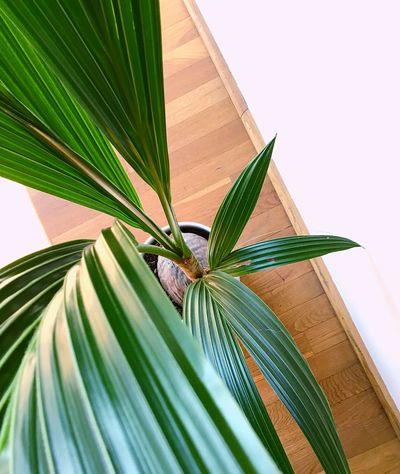 Palm Leaf Plant Part Green Color Close-up Nature No People Animal Wildlife Plant Palm Leaf Palm Tree