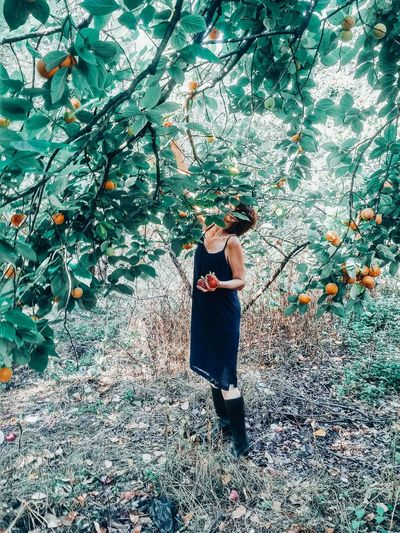 Side view of woman harvesting persimmons from tree at farm