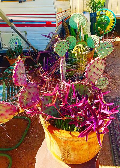 Desert beauty Cactus Garden No People Fishing Net Day Outdoors Multi Colored Nautical Vessel Close-up