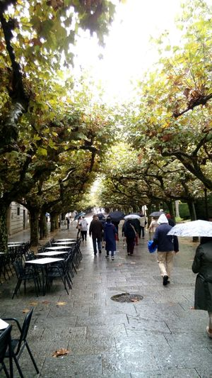 Tree Real People Outdoors People Day Large Group Of People Burgos Rain Rainy Days Walking Espolon Adapted To The City TCPM Rethink Things