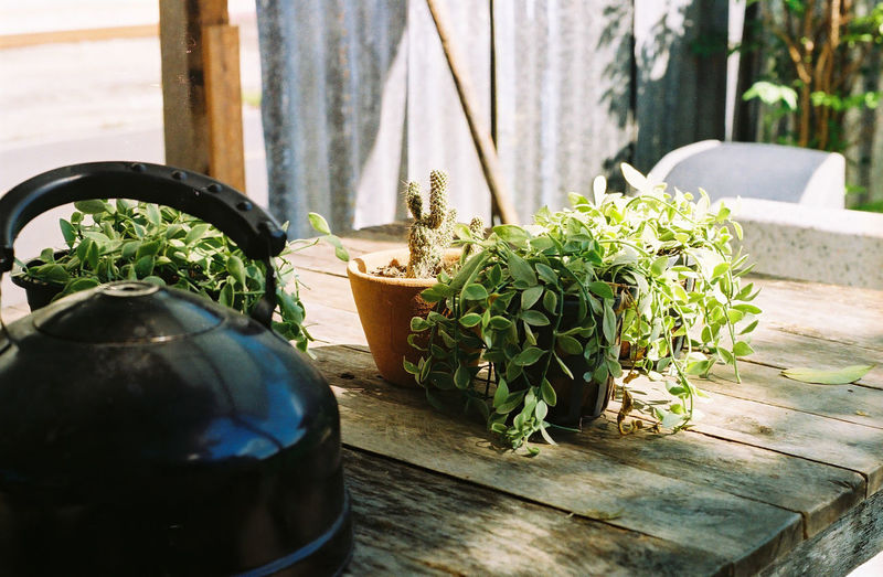 Potted plant on table