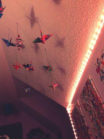 Lights Paperbirds