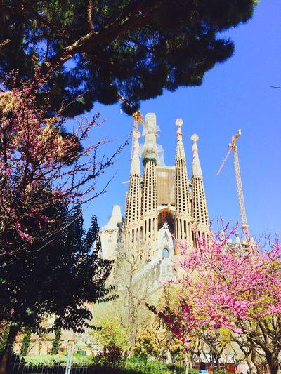 Relaxing Amazing Wiev Relaxing Walking Around Escaping Barcelona España Getting Inspired View