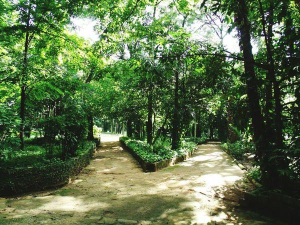 Hortoflorestal Parques  Parquehortoflorestal São Paulo, Brasil Sao Paulo - Brazil Park