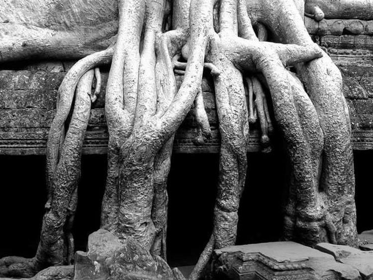 Lifeasiseeit John Nelson Southeast Asia Reclaiming Nature Tree Jungle Angkor Wat Tomb Raider  Temple Ta Prohm Cambodia Worldheritage Architecture History Johnnelson Religious
