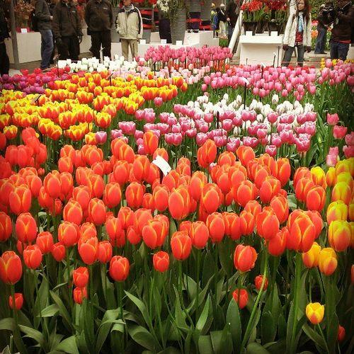 Keukenhof 世界から春の花を愛でるために人が集まり、笑顔で歓声をあげ、歌う、ここは天国。