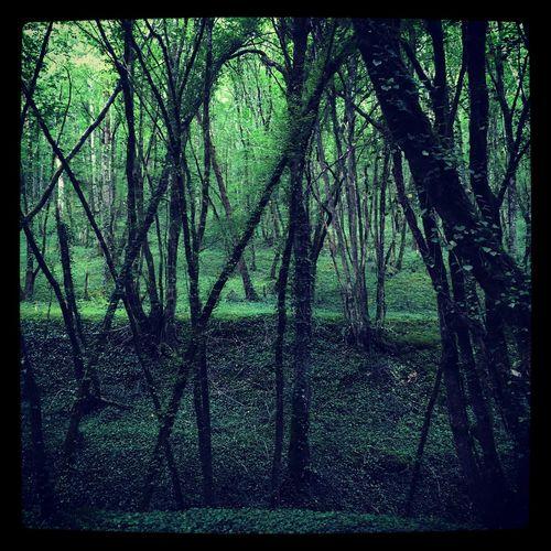 Forest Forest Forest Photography Wood France Photooftheday Photography Photo Photographer Iphonephotography Landscape Lot Et Garonne