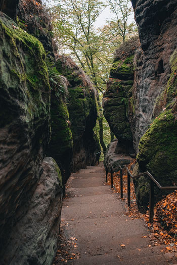 Footpath amidst rocks in forest