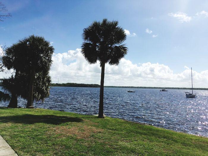 Water Palaka Sea Horizon Over Water Outdoors Palm Tree Day