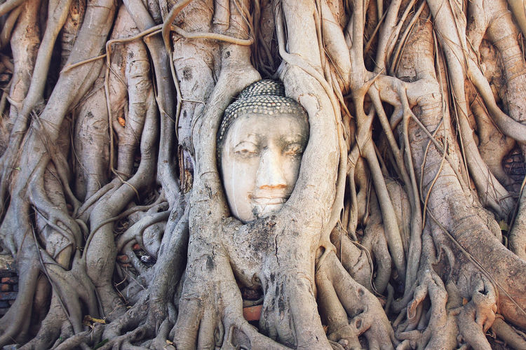 Statue of buddha in tree trunk
