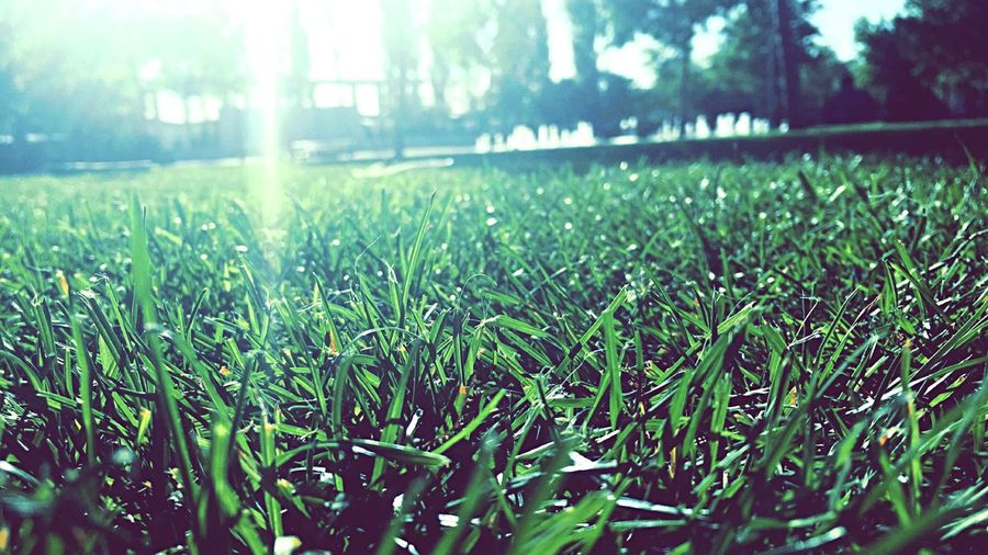TakeoverContrast Grass Green Color Field Growth Grassy Beauty In Nature Focus On Foreground Nature Close-up Tranquil Scene Tranquility Blade Of Grass Scenics Day Water Freshness Green Grass Area Outdoors Surface Level