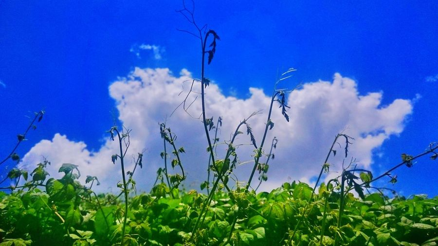 Green Earth Greenvsblue Vines Nature