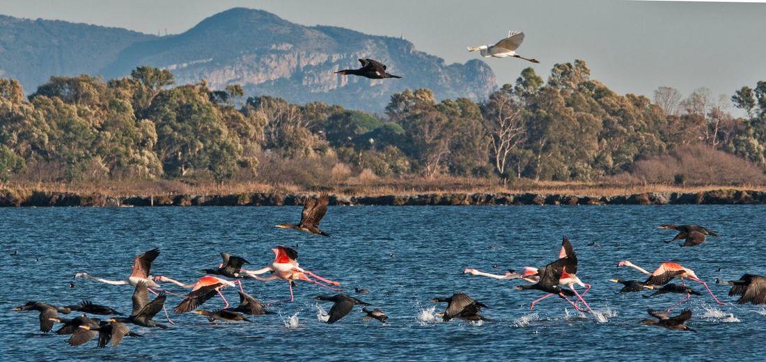 Birds flying over sea