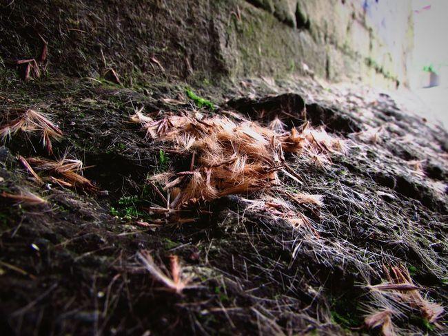 Deceptively Simple Semillas en otoño Seeds Beauty Loneliness Canonsx510
