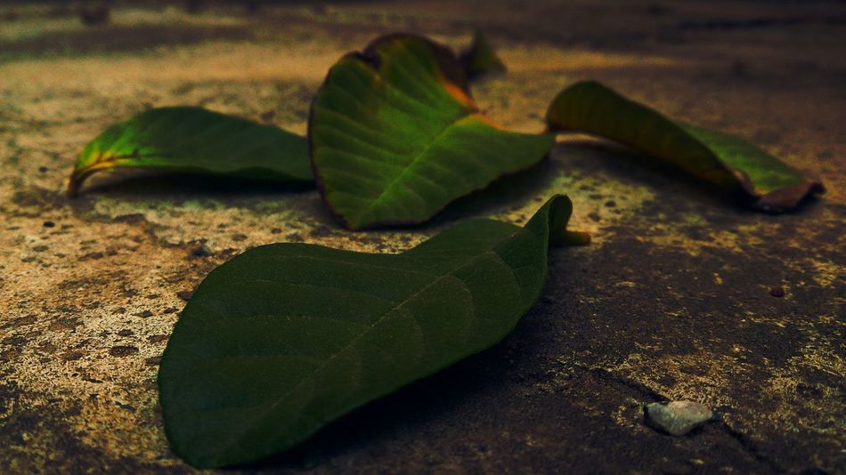 Getting Inspired Inspired Feeling Inspired Taking Photos Check This Out My Photography No People Beautiful Nature Folhas Nature Everywhere Green Leaves Green Green Green!  Leaves_collection Leavesporn Brazil Fallen Leaves Popular Photos Leaves Different Different Colors