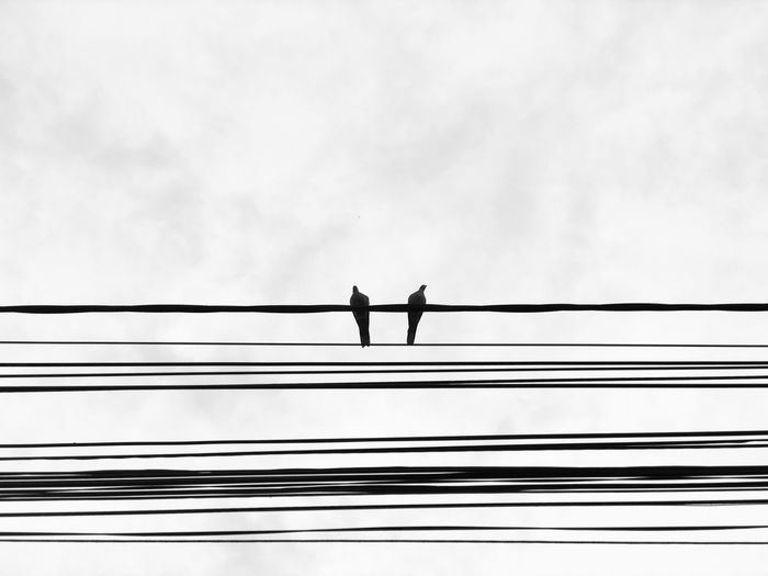 Monochrome photo of two birds sitting on cable lines