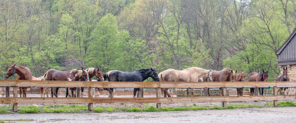 row of horses at a stable, stand out in a light rain while they wait for visitors to come