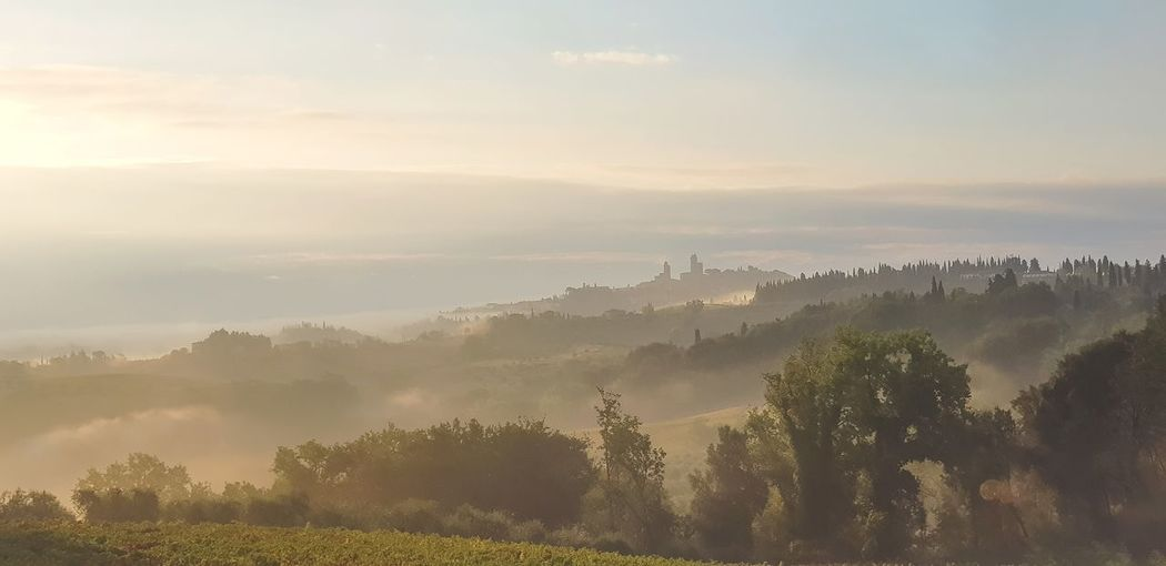 View of the distant towers of San Gimignano across the misty morning Tuscan countryside EyeEm Nature Lover Landscape EyeEmNewHere Misty Morning Tuscany Tuscany Countryside San Gimignano Tree Mountain Dawn Rural Scene Morning Field Valley