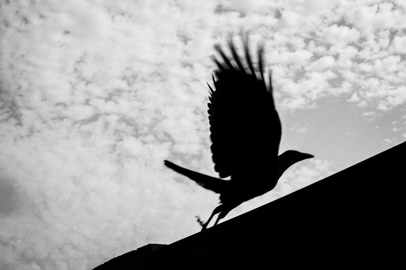 Low angle view of a silhouette bird