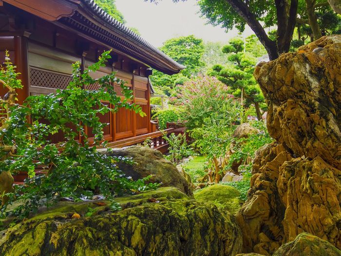 Chinese Garden Flowers,Plants & Garden Relaxing Mood Captures Buddist Temple Getting Inspired Enjoying Life EyeEm Nature Lover My Point Of View Check This Out