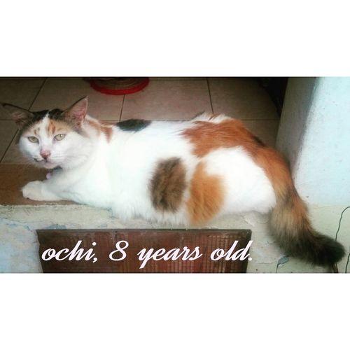 Ochi Thecat Mypet Catsaremyfriends Animalsaremyfriends Catlover Animallovers Cat♡ Cats Of EyeEm Cats 🐱 Catstar #cat #catnap #catoftheday #catpic #catlovers #catsconnect #catinstagram #catsofinstagram #gato #gatinhos #gatto #garfield #petstagram #premierpet #photooftheday #petsofinstagram #picoftheday #petlovers Instabicho Ilovecats Ilovemypet Issovici [ [a:8690808] Rescuer Calicocat