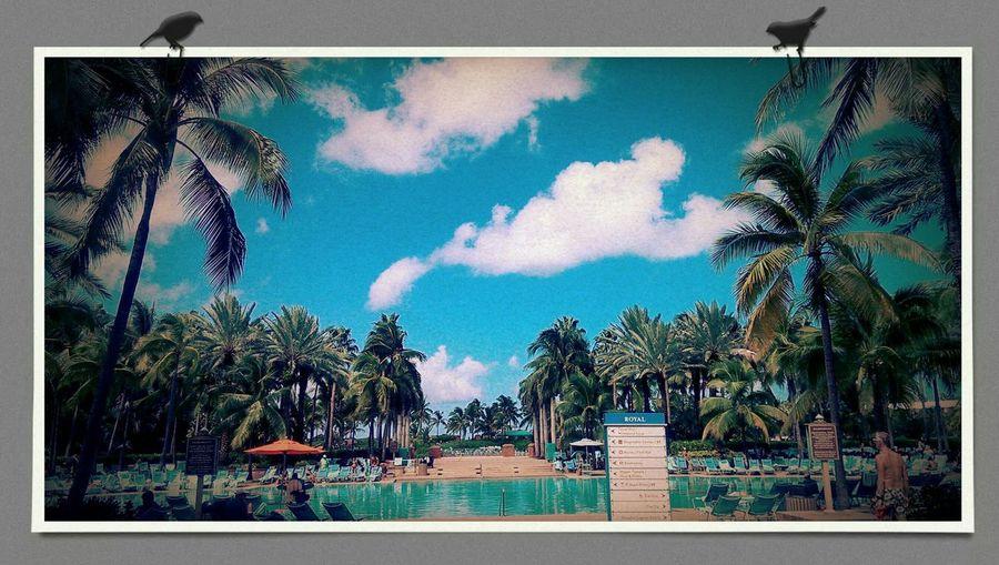 First time in Atlantis. Getting A Tan Enjoying The Sun Relaxing Taking Photos Swimming Sunshine