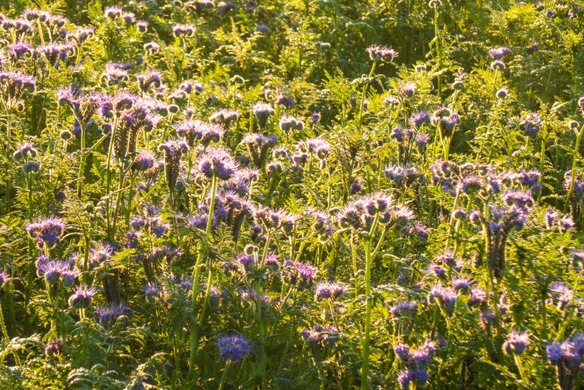 Nature Wild Flowers