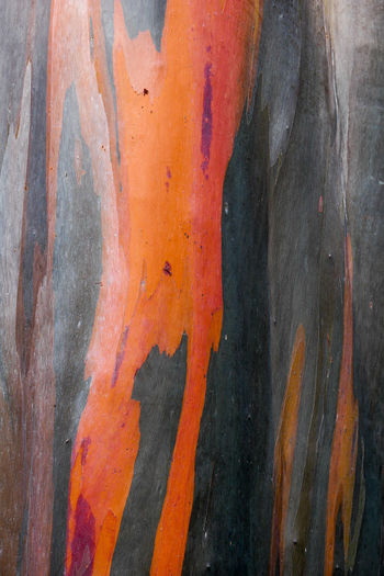 Orange Color Backgrounds Close-up Full Frame Textured  No People Pattern Day Weathered Outdoors Multi Colored Tree Trunk Wood - Material Nature Paint Damaged Trunk Metal Abstract Old Textured Effect