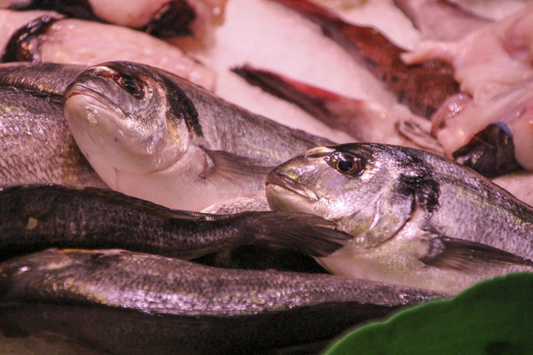 Animal Animal Themes Close-up Fish Fish Market Food Food And Drink For Sale Freshness Full Frame Healthy Eating Indoors  Marine Market No People Raw Food Retail  Seafood Vertebrate Wellbeing