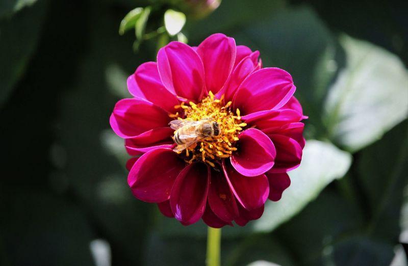 Pollinators in