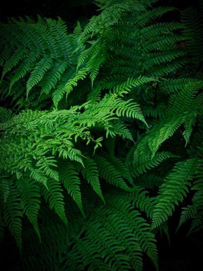 Moody leafs