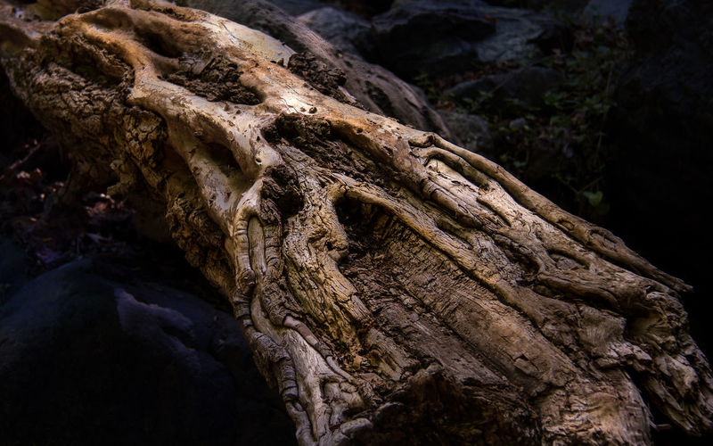Years of being washed over by a mountain stream has created the most wonderful texture and shape on this fallen tree. Ive seen it many times while walking the same path in the Troodos Mountains but have never caught a good shot...until now.. Enjoy. Happy days all. :-) Decay The Week On EyeEm Bark Beauty In Nature Close-up Dead Tree Decayed Beauty Decaying Erosion Nature No People Outdoors Root Rough Textured  Tree Tree Trunk