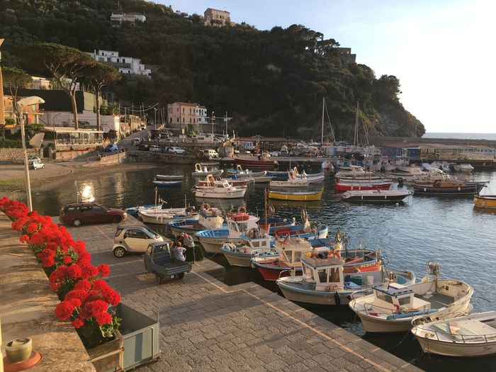 Sweet dreams in Italy Fish Town Architecture Boat Building Exterior Built Structure Day Harbor Italy Little Town Mode Of Transport Moored Nature Nautical Vessel No People Outdoors Popckorn Port Sea Sea And Sky Sky Transportation Tree Water