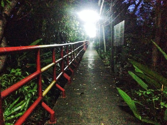 Street Street Night Railing Nature Plant Night No People Illuminated Tree Outdoors Architecture Water Connection The Way Forward Motion Built Structure Direction Growth Park Cold Temperature