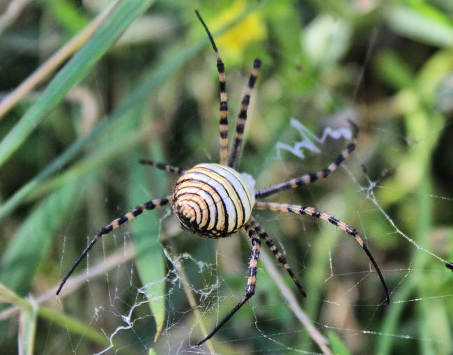 Spider Web One Animal Insect Animal Themes Animals In The Wild Close-up Spider Animal Wildlife Nature Beauty In Nature Inspired Backgrounds Scenics Focus On Foreground Day No People