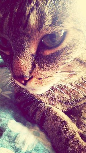 My Pets♥ Cat♡ Awesome