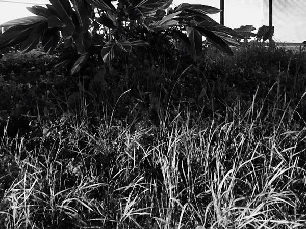 Another Point Of View Black And White Black & White Urban Landscape IPhoneography Light And Shadow Beauty In Nature Black And White Photography Plant Street Photography Layers And Textures Layering Light And Dark