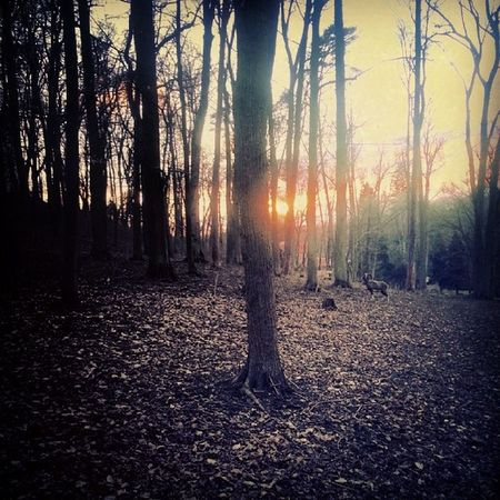 Castle Park Konopiště  Sunset nature trees leaves tagsforlikes instaphoto czechrepublic sunny day walking with friend friday