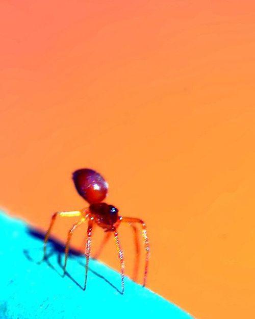 "Spider on the rim of my outdoor claypot. I looked at it, and think ""Aha =)"" how about something simplistic Minimalmood 2) Macrongawi 3) 9vaga_macro9 4) Bugs_are_us_ 5) Exclusive_bugs 6) Sn_may1 7) Minimaldotcom 8) Bpa_macro 9) Pocket_minimal 0) Ig_minimalshots 1) Rsa_macro 2) Electric_macro 3) Loves_united_macro 4) Macro_spotlight 5) Fotofanatics_macro_ 6) Amateurs_shot 7) Resourcemag 8) Macroworld_ 9) Ig_affair_weekly 0) Ig_myshot 1) Best_macro 2) Jj_indetail 3) Ig_closeups 4) Rsa_minimal 5) Macro_captures 6) ig_azhubs 7) learnminimalism 8) macroclique 9) show_us_macro 0) mindtheminimal"