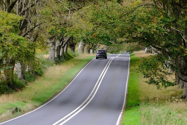 Car on road by trees
