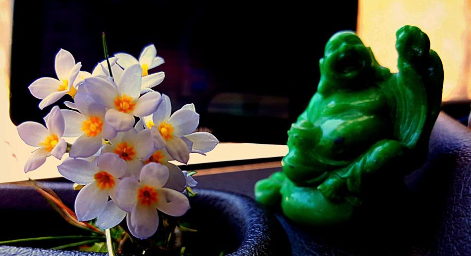 Budda On Flowers Animal Themes Beauty In Nature Being Nice  Budda Close-up Day Flower Flower Head Fragility Freshness Indoors  Nature No People