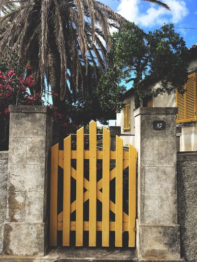 Tree Built Structure Architecture Yellow Building Exterior Palm Tree Outdoors Flowers Door Vintage Tranquility Tranquil Scene Urban Urbanphotography Street Streetphotography House Fine Art