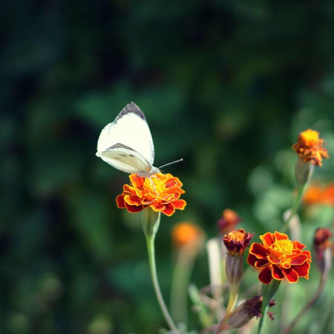 flower, growth, petal, nature, plant, beauty in nature, freshness, fragility, flower head, no people, day, focus on foreground, outdoors, blooming, close-up