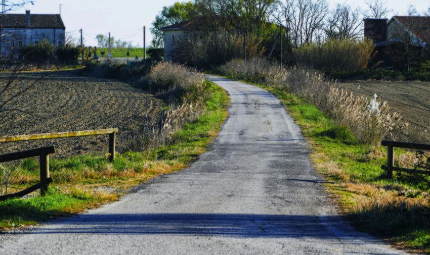 Empty road along plants in city