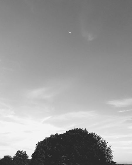 The moon above. Group Of Objects Silhouette Sunlight Copy Space Idyllic Atmospheric Mood Environment Full Frame Selective Focus Blackandwhite Small Moon Branch Leaves Sky Tree Plant Cloud - Sky Nature Low Angle View Silhouette Beauty In Nature Scenics - Nature No People Tranquility Tranquil Scene Growth Outdoors Dusk