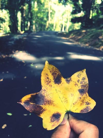 Leafy star Human Body Part Leaf Close-up Nature Plant Part Human Hand Day One Person Autumn Hand Plant Body Part Change Yellow Focus On Foreground Personal Perspective Outdoors Sunlight Beauty In Nature