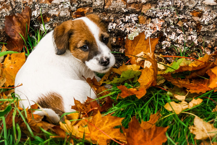 High angle view of puppy in park during autumn