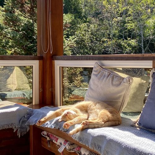 Cat sleeping in window