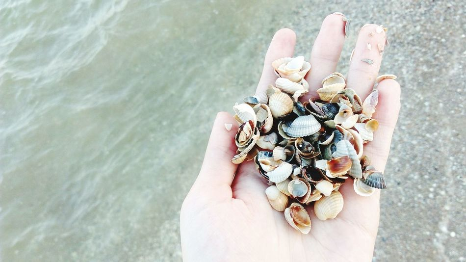 First Eyeem Photo Seaside Beachphotography Shells Pure Color Purecolor Pure Colors Hand