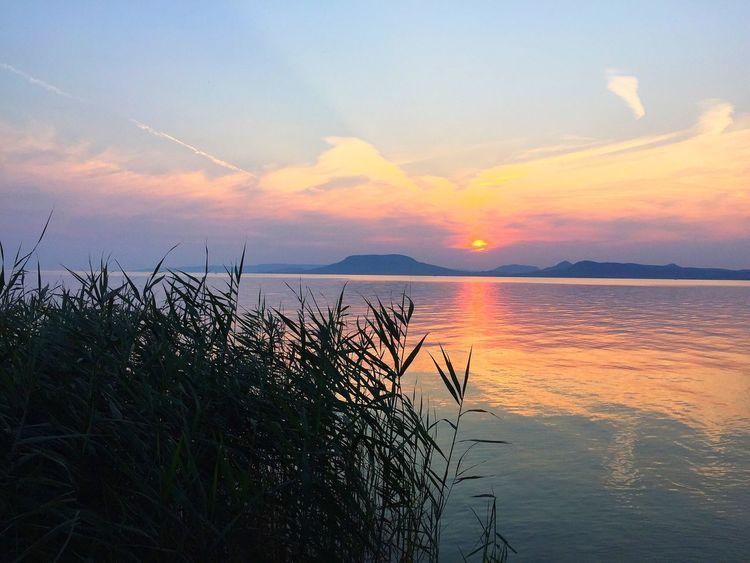 Balaton landscape with view at Badacsony sunset Badacsony Sunset Yellow Pink Light Lake Water Reflection Reeds Landscape